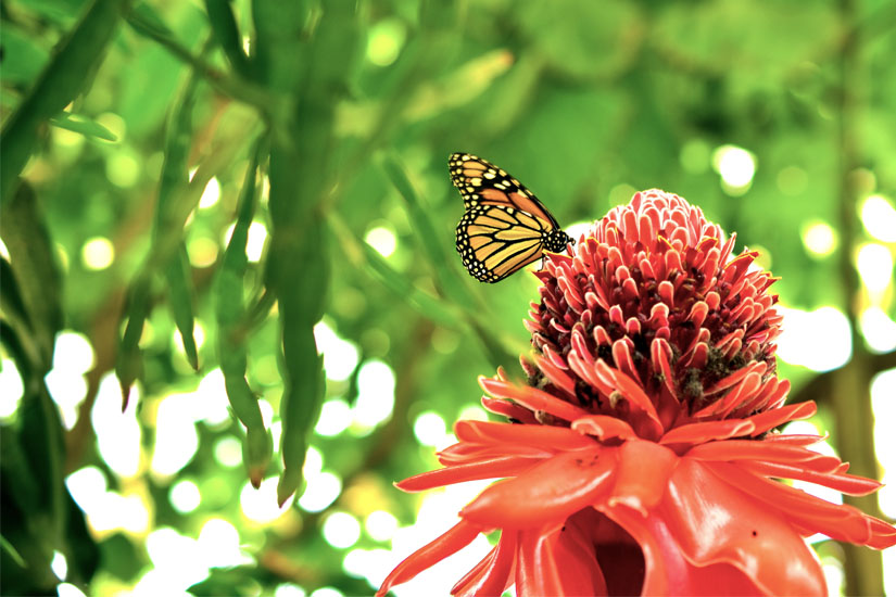 Schmetterling im Benalmadena Park