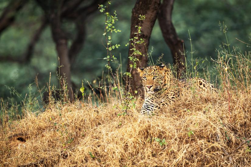 Nahargarh Biological Park ist ein Wildtierpark