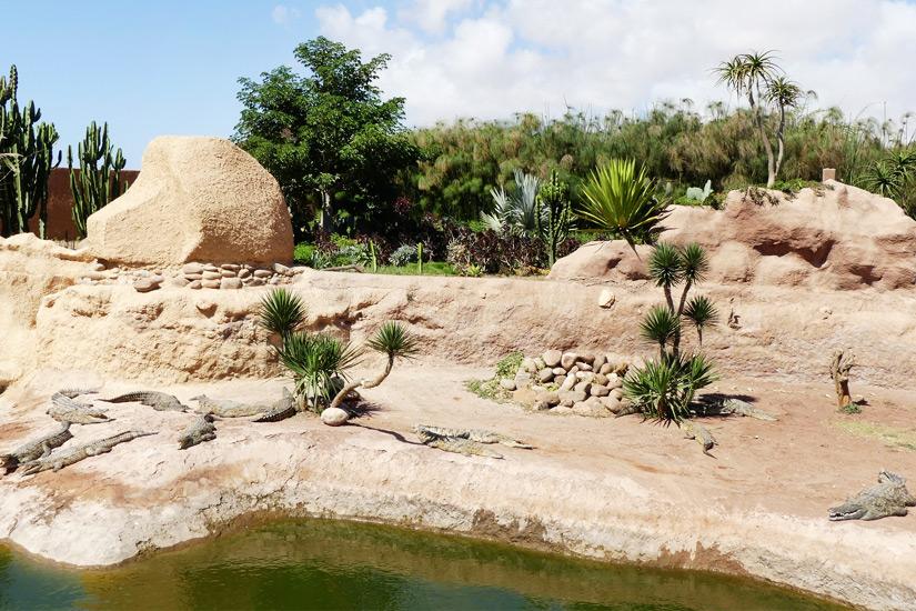 Krokodile in Agadir