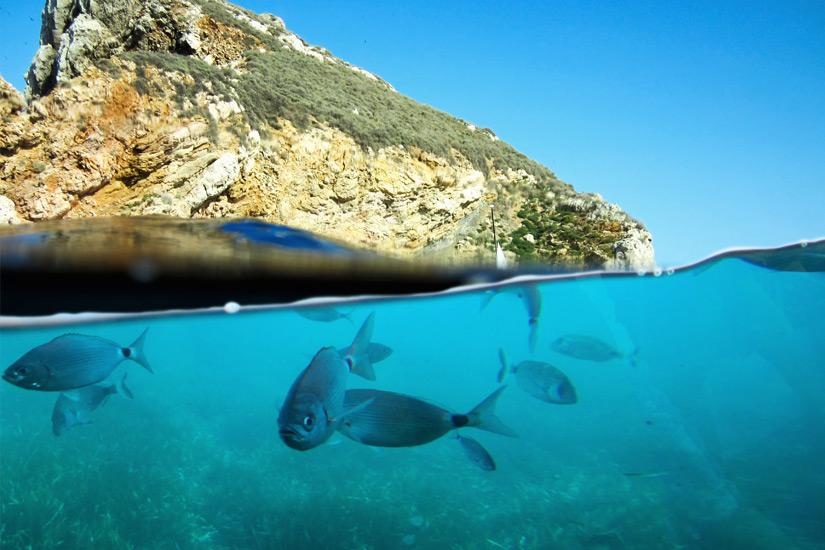 Unterwasserwelt der Islas Medas