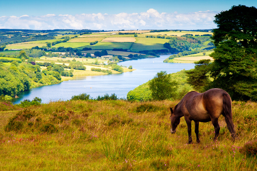 Pony im Nationalpark Exmoor