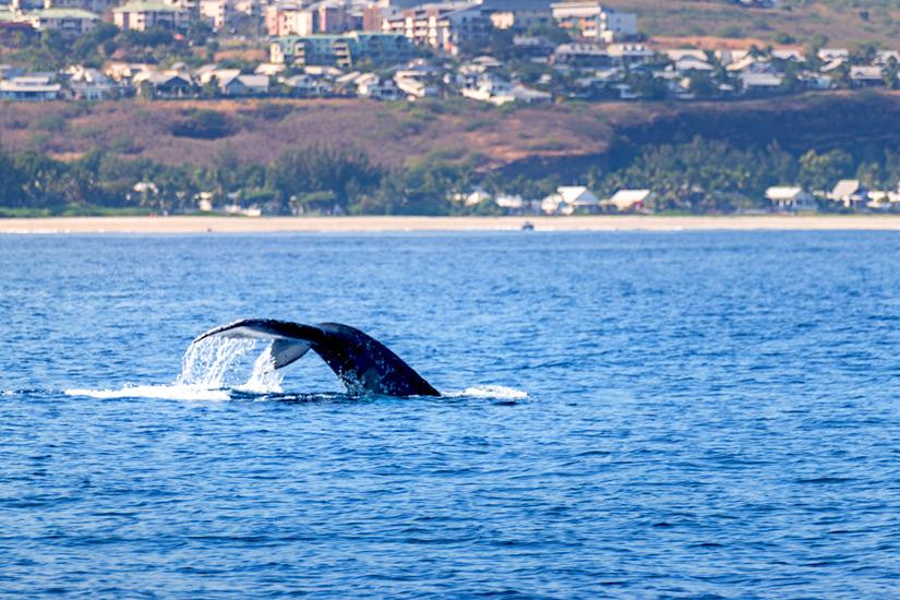 Walflosse vor der Kueste
