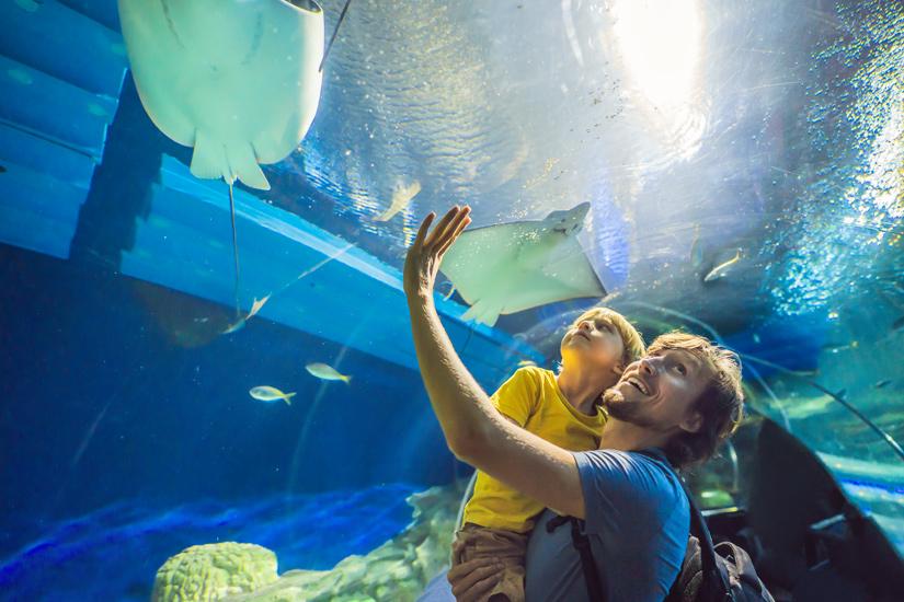 Tiere-Dubai-Aquarium
