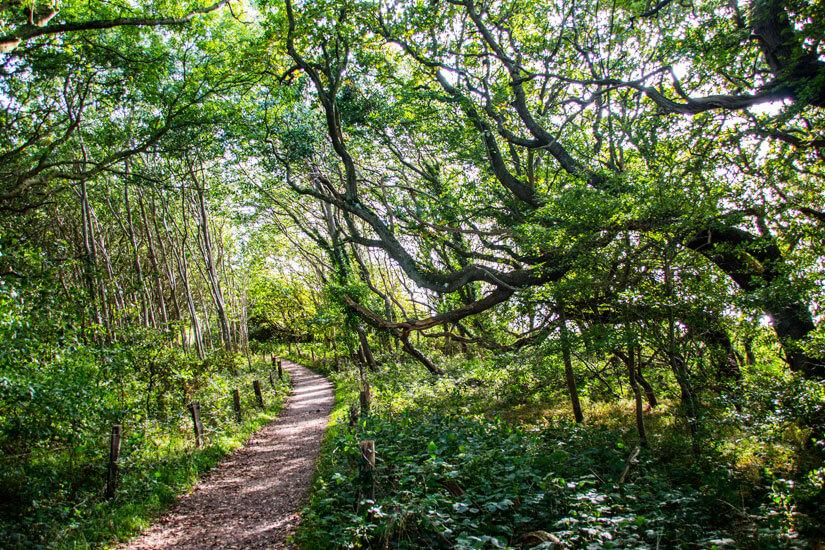 Wanderweg in der Geltinger Birg