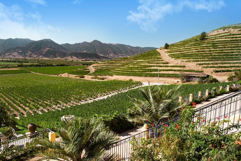 Weinanbau in Chile