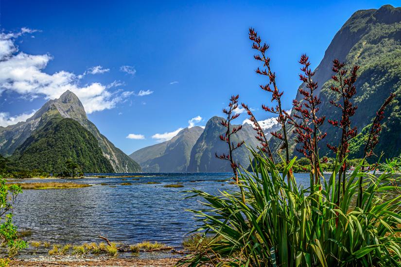 Der Fjord Milford Sound