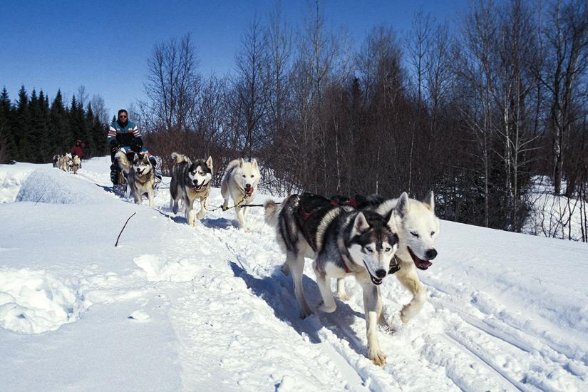 Mit dem Hundeschlitten durch Quebecs Waelder