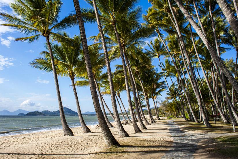 Der-saubere-Palm-Cove