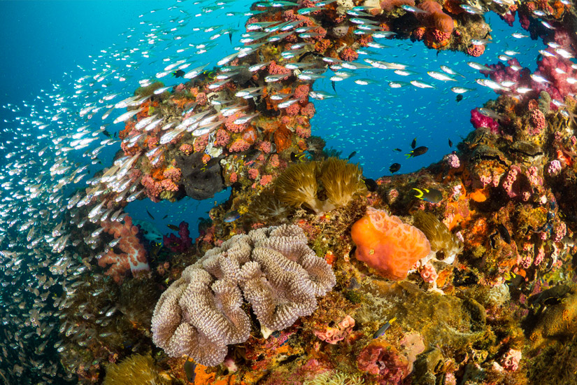 Korallenbewuchs-an-der-SS-Yongala