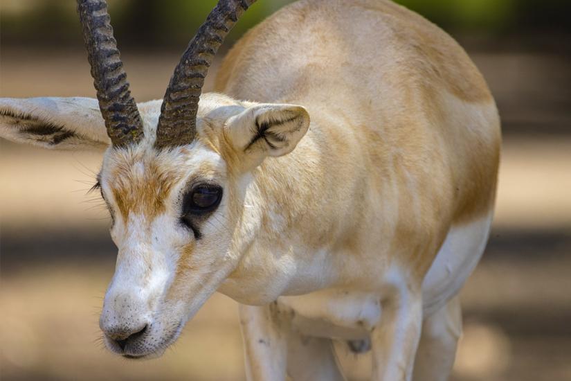 Gazelle-Wildlife-Park-Abu-Dhabi