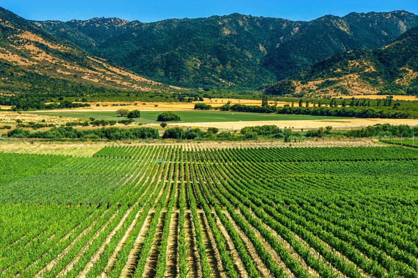 Weinanbau-in-der-Provinz-Colchagua
