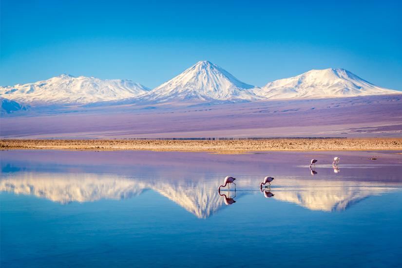 Atacama-Wueste-Flamingos-in-der-Laguna-Chaxa